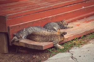 Schlafende Kätzchen auf einer hölzernen Veranda an einem sonnigen Tag foto