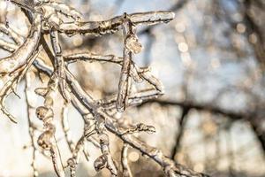 natürlicher Hintergrund mit Eiskristallen auf Pflanzen nach einem eisigen Regen foto