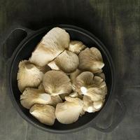 Draufsicht auf Austernpilze foto