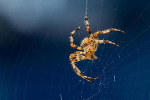 Nahaufnahme einer Spinne auf ihrem Netz foto