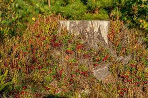 Stumpf mit Pflanzen bedeckt foto