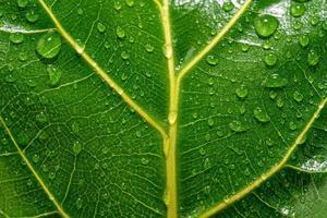 Nahaufnahme eines feuchten und glänzenden grünen Blattes mit gelben Adern foto