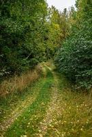 Weg in einem grünen Wald foto