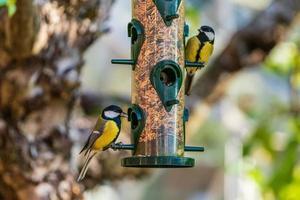 ein paar Kohlmeisenvögel, die von einem Vogelhäuschen essen foto