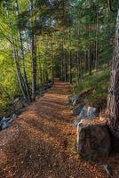 Wanderweg in einem Wald in Schweden foto
