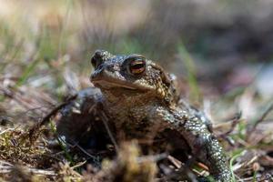 Nahaufnahme eines grün gesprenkelten Frosches im Sonnenlicht foto