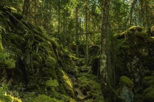 wild gewachsener Wald auf einem Berg in Schweden foto