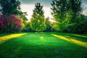 natürlicher Hintergrund mit grünem Rasen foto