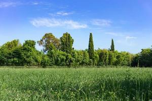 Naturlandschaft mit grünem Troway und Bäumen foto