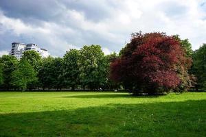 Parkwiese mit grünem Gras foto