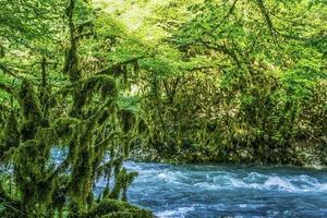 Landschaft mit einem turbulenten Gebirgsfluss foto