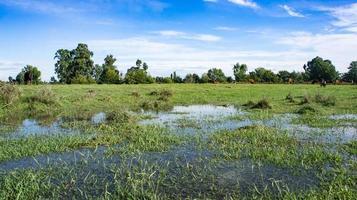 Naturlandschaft einer grünen Wiese foto
