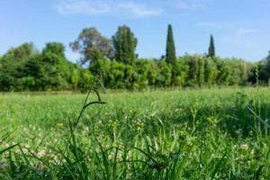 natürlicher Hintergrund mit grünem Gras und Bäumen am Horizont foto