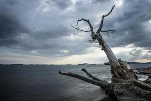 der Stamm eines trockenen Baumes auf dem Hintergrund der Seelandschaft foto
