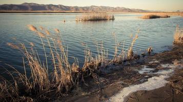Das Seeufer ist mit Schilf bedeckt, und die Reste des Schnees sind vor dem Hintergrund von Hügeln und Himmel noch nicht geschmolzen foto