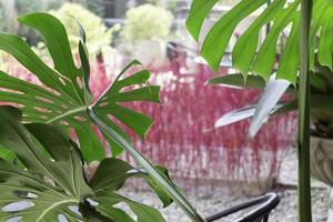 grüne tropische Blätter foto