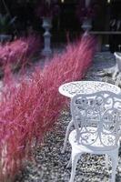 rosa Gras in der Nähe von Gartenmöbeln foto