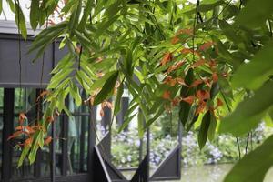 orange Blüten mit grünen Blättern foto