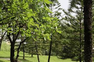 grüner Garten im Sommer foto