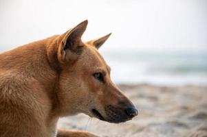 schläfriger Hund auf dem Meersandstrand während der Sommerferienzeit, Freiheit in der Natur, glücklich, im tropischen Strand zu schlafen, Hündchen niedlich im Urlaub foto