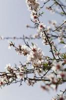 Schließen Sie die Äste der Bäume mit blühenden Blumen foto