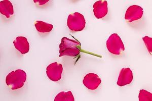 Rosenblätter zum Valentinstag foto