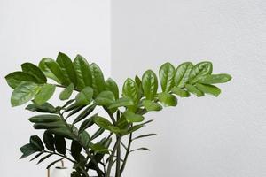 Pflanzenblätter schließen foto