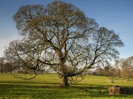 Wintereiche in einem Yorkshire Park England foto