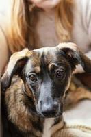 Nahaufnahme eines Hundes, der auf einem Schoß sitzt foto