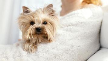 Hund in den Armen des Besitzers foto