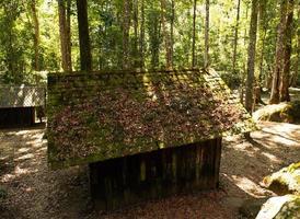 grüner Wald und Haus unter dem Sonnenschein foto