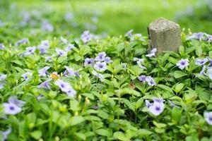 Selektiver Fokus auf kleine lila Blüten mit unscharfem Betonpfosten im Hintergrund foto