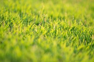 Nahaufnahme von Grasblättern, die auf dem Feld mit Sonnenlicht an einem sonnigen Tag wachsen foto