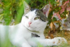 schöne Katze, die mit einer Pflanze in einem Garten spielt foto