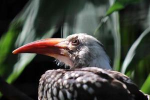 Lichtstrahl auf Vogel foto