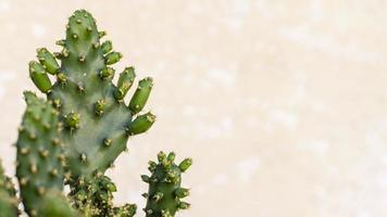 Kaktus mit Kopierraum foto