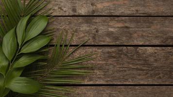 Draufsicht schöne Pflanzenblätter mit Kopierraum foto
