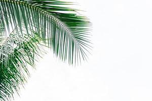 Kokosnussblattrahmen lokalisiert auf weißem Hintergrund mit Kopienraum, Sommerkonzept. foto