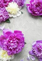 Pfingstrosenblumen auf einem grauen Betonhintergrund foto