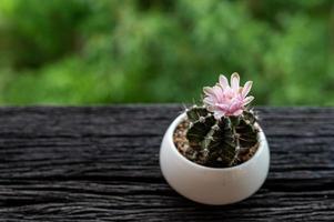 Gymnocalycium-Kaktus mit rosa Blume im Topf auf Holztisch foto
