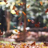 quadratischer Hintergrund des Herbstlaubs foto