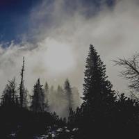 quadratischer Hintergrund von Bäumen und Nebel mit Sonne foto