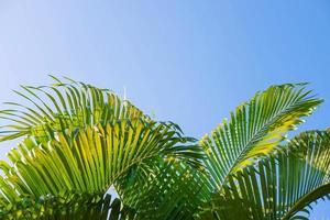 die Hintergrundblätter der Palmen und des Himmels, Sommerkonzept. foto