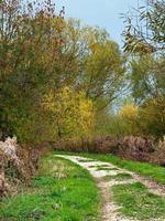 Weg durch Wheldrake Ings Naturschutzgebiet North Yorkshire im Herbst foto