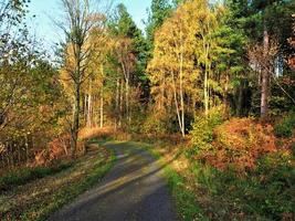 Weg durch einen Wald im Herbstsonnenlicht foto