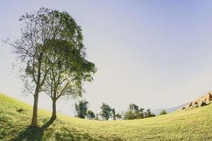 Landschaft mit Baum in der Natur foto