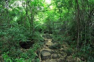 Pha Luang Wasserfall Waldpark, Amphoe Si Mueang Mai, Ubon Ratchathani, Thailand foto