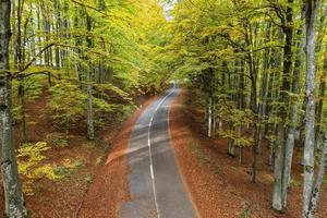 Straße in der herbstlichen Waldoberwinkelansicht foto