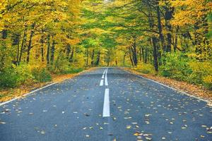 schmale kurvenreiche Straße im gelben Herbstwald mit abgefallenen Blättern auf der Straße foto