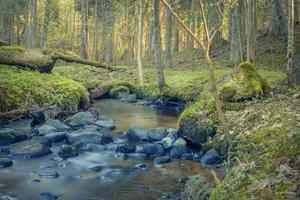 Morgen Sonnenaufgang im wilden Wald am Fluss über Felsen foto